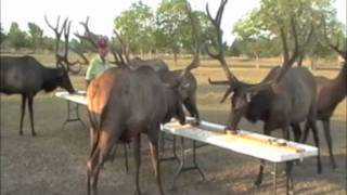 Midway Deer Processing, Katy, Texas: Brunch With The Bulls