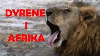 Dyrene i Afrika av Torbjørn Egner