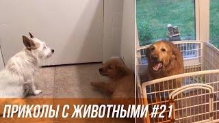 Мир животных / Все о животных / Милые животные / Смешные кошки собаки / Животные дома.