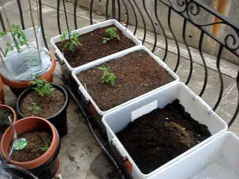 Growing Vegetables On Your Balcony   Part 1   YouTube