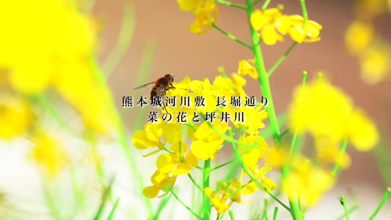 春の熊本ドローン空撮