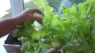 The simplest hydroponics. Простейшая гидропоника.