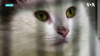 Кошки и коронавирус