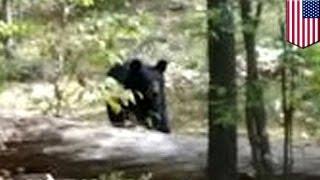 Турист сфотографировал медведя за несколько минут до гибели в его лапах