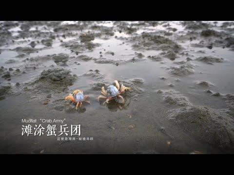 Discovering Mysteries : lancement de la nouvelle saison du documentaire sur la nature de Hainan