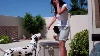 Devon's Dog Trick Training - Paws Up!