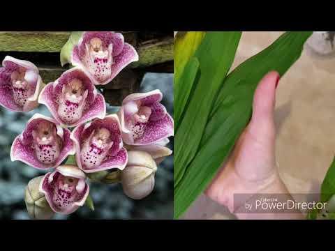 😍Много орхидей с выставки👋очень много🙃прекрасные растения от Ecuagenera и д.р.