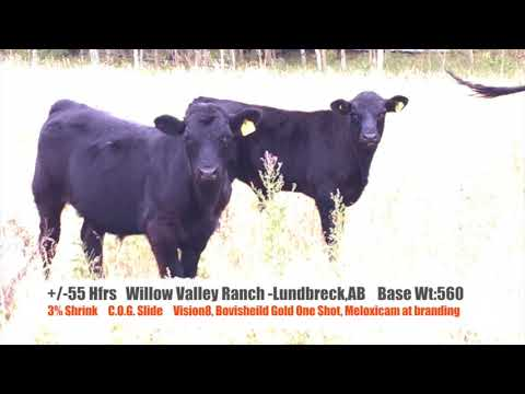 2017 LA Willow Valley Alberta 55Hfrs