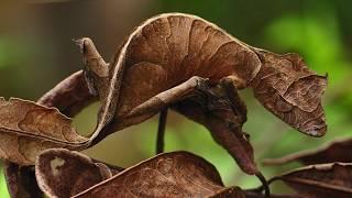 10 أشياء غريبة تم أكتشافها في مدغشقر | اكبر شبكة عنكبوت في العالم .!!