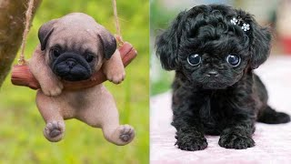 Cute Puppies-Cute and Funny  baby Dog Videos Compilation #4|Cute Aww Animals