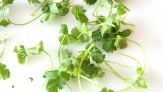 Use This as a  Substitute for Cilantro