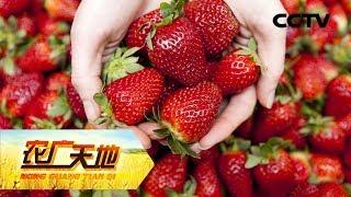 """《农广天地》 20190729 """"莓""""好的搭档  CCTV农业"""