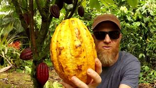 Download Tree to Bar || How to Make Chocolate Every Step Mp3 and Videos