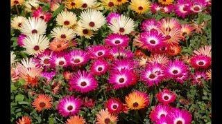 Строение цветка и его функции
