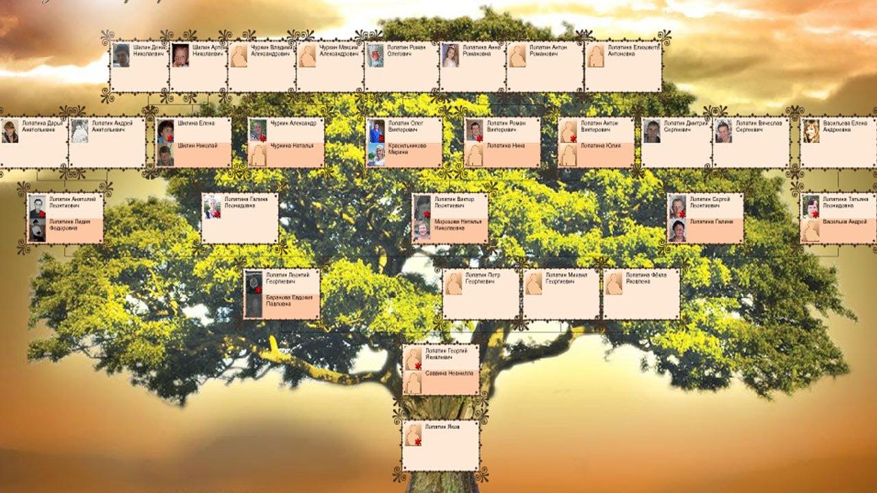 фото родословное дерево