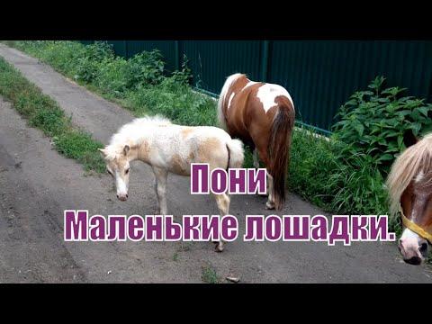 Мини лошади. Лошадки. Пони. Mini horse. Pony.