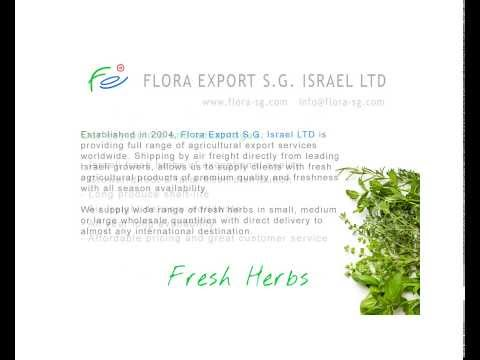 Flora Export S.G. Israel LTD Premium Quality Fresh Herbs Wholesaler (HD)