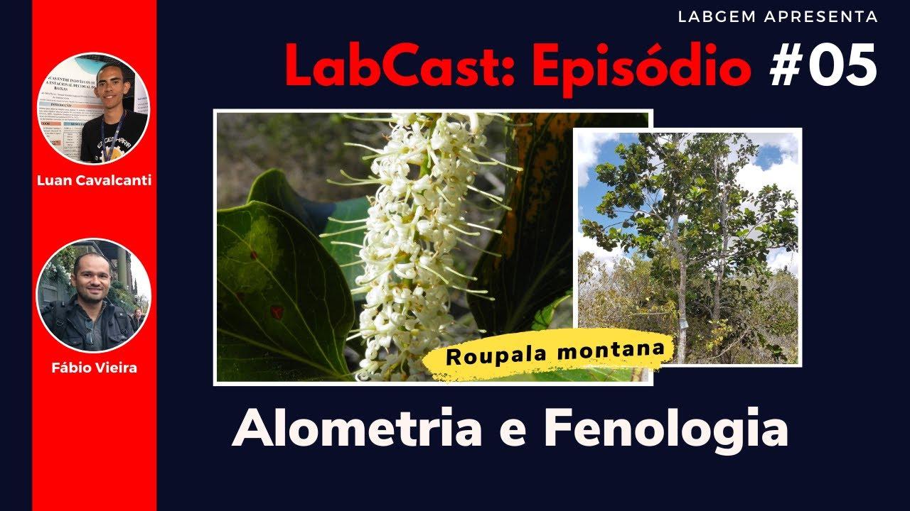 Alometria e Fenologia da Roupala montana – LabCast: Episódio #05