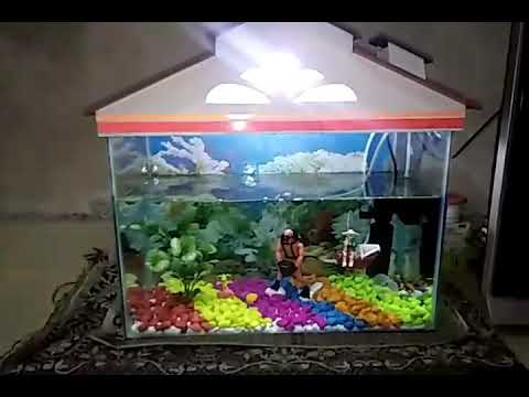 Aquarium decorations, color stone decoratiWhat's up status, Small Fish tank at home one click Puneri