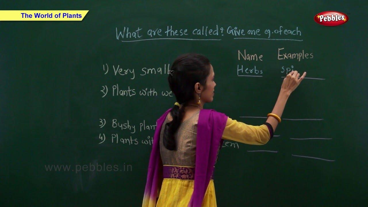 CBSE Class 2 Science : World of Plants | Class 2 Science CBSE School  Syllabus Videos | NCERT