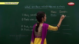 CBSE Class 2 Science : World of Plants | Class 2 Science CBSE School Syllabus Videos | NCERT