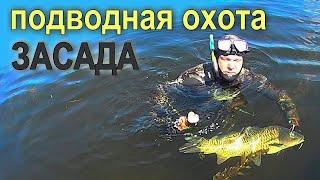 Подводная охота - Засада(https://youtu.be/5cPw2OAvhWo Подводная охота - может быть очень разной. В данном видео поговорим о таком тактическом..., 2016-08-31T16:05:15.000Z)