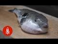 Taste the Poison Puffer Fish