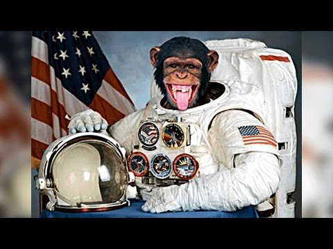 5 Animals That Went To Space
