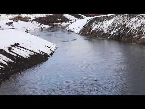 Утки в Новокузнецке