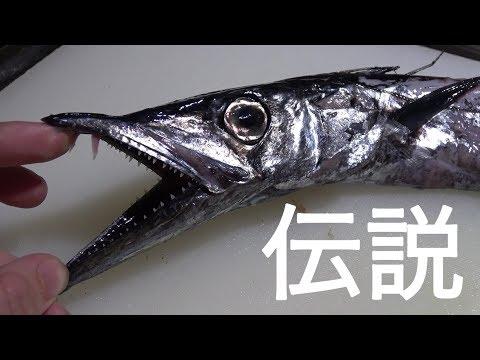 【研究所いき?】1年に一匹しか取れない魚がきまぐれクックにやってきた!!