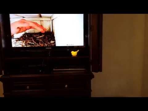 Bird Nest Activity Detection System - DIY