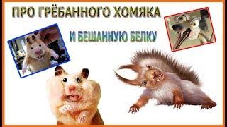 Про гребаного хомяка и бешенную белку)))