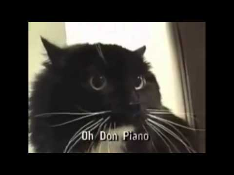 Oh Don Piano (Talking Cat with Subtitles)