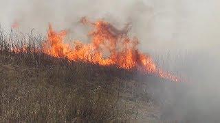 Пожар на границе моего участка. Репортаж с места от 26.04.19 / Самогон Саныч live