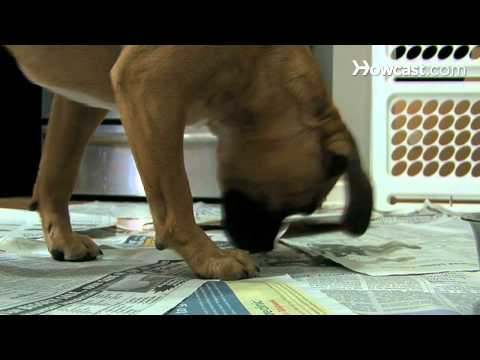 How to Paper-Train Your Dog