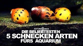 5 Beliebte Schnecken fürs Aquarium
