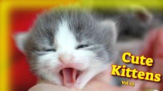 Cute Kittens Vol.13  Funny Cat Videos 2021  Cute Cat Videos 2021