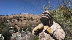 Bisbee Bees - killer AZ problems
