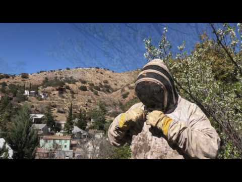 Bisbee Bees - killer AZ problems