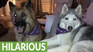 Husky furious over reality TV outcome, throws temper tantrum