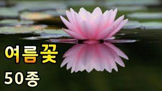 여름꽃 종류 아름다운 여름꽃과 꽃말 (50종)Beaut…