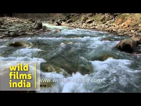 Gushing rocky Himalayan torrent makes for great trout stream: Kashmir
