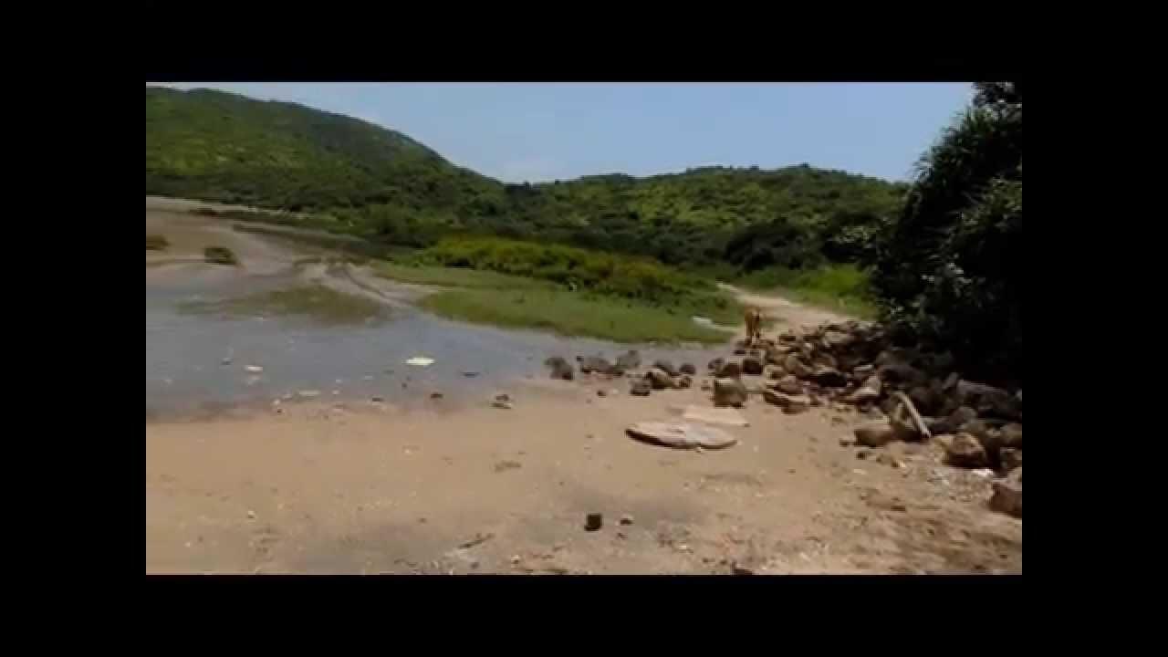 東涌水口掘蜆記 - YouTube