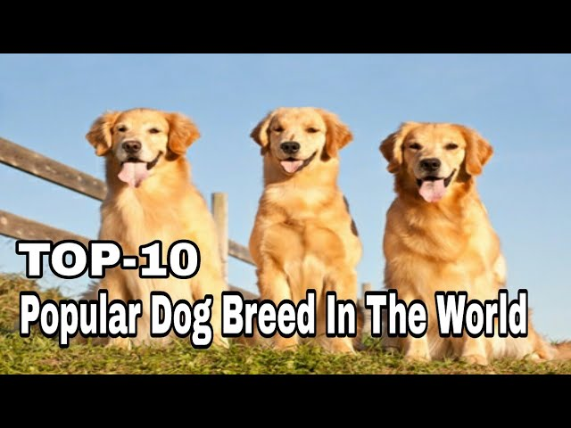 TOP-10 Best and Most Popular Dog Breed In The World / Aryan Dog Club  Aryandogclub