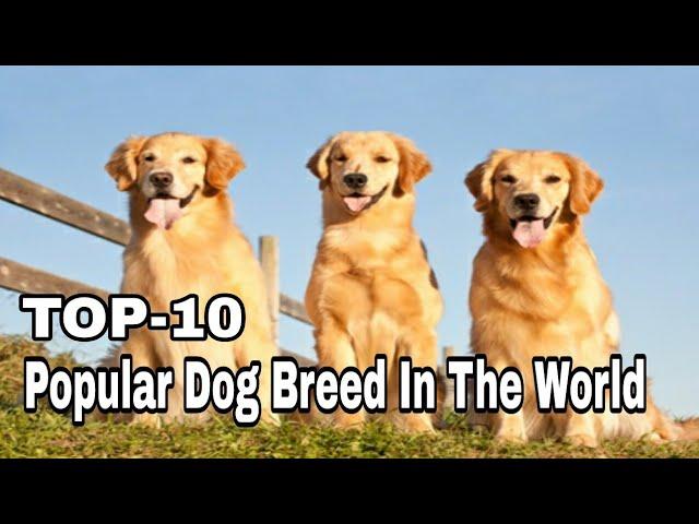 TOP-10 Best and Most Popular Dog Breed In The World / Aryan Dog Club  Aryandogclub
