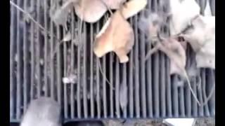 Угольный фильтр салона Лада Гранта.