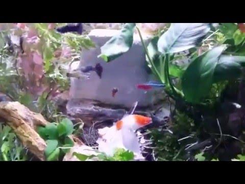 TitleAn act of love  Aquarium