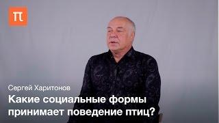 Социальное поведение птиц Сергей Харитонов