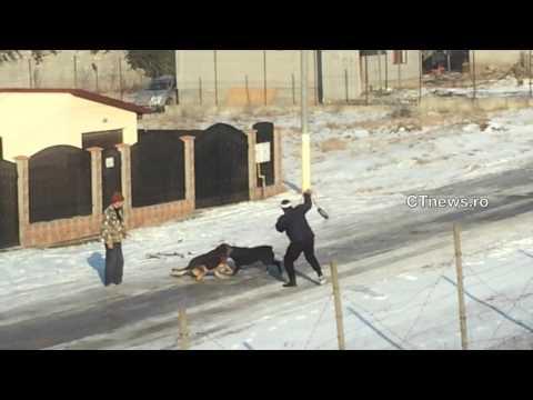 ctnews.ro | Lupte de caini la Valu lui Traian / Dog Fighting in Valu lui Traian