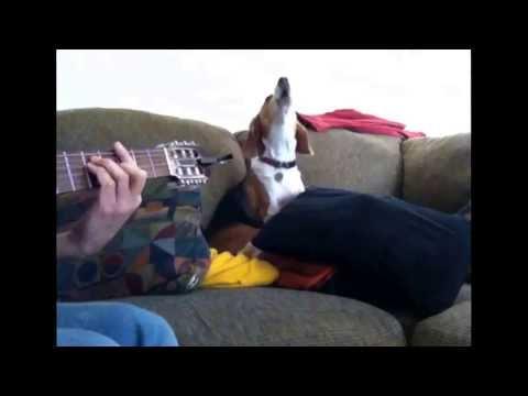 Singing beagle - Soul sister